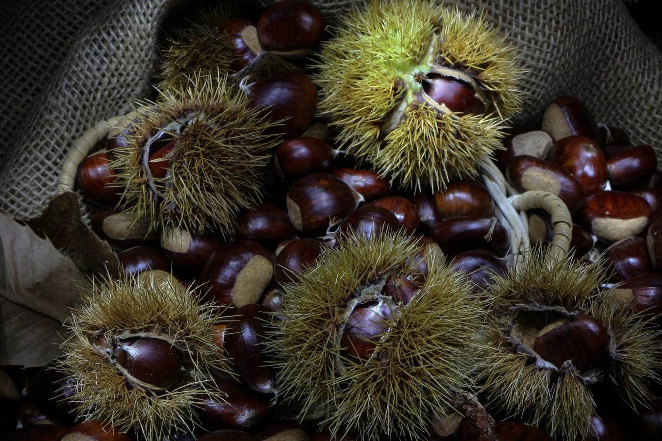 HealthHack #10: Maroni – Gesunder Snack vom Weihnachtsmarkt